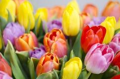 Manojo de tulipanes coloridos Fotos de archivo