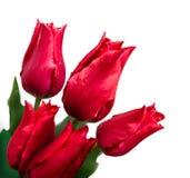 Manojo de tulipanes en el fondo blanco Imagen de archivo