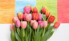 Manojo de tulipanes en fondo colorido Fotografía de archivo libre de regalías