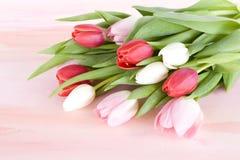 Manojo de tulipanes en fondo de la acuarela Fotos de archivo libres de regalías