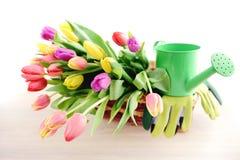 Manojo de tulipanes en una cesta con las herramientas que cultivan un huerto Imagen de archivo