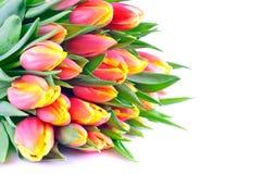 Manojo de tulipanes naranja-amarillos bicolores Fotografía de archivo