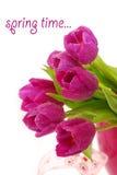 Manojo de tulipanes púrpuras Imagen de archivo libre de regalías