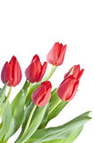 Manojo de tulipanes rojos Fotografía de archivo