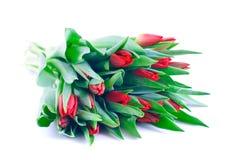 Manojo de tulipanes rojos Imágenes de archivo libres de regalías