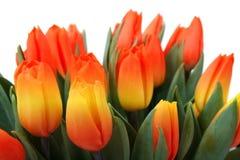 Manojo de tulipanes rojos y amarillos encantadores Foto de archivo libre de regalías
