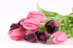 Manojo de tulipanes sobre blanco Imagen de archivo libre de regalías