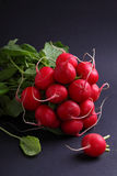 Manojo de un rábano rojo del jardín Imagenes de archivo
