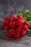 Manojo de un rábano rojo del jardín Fotos de archivo
