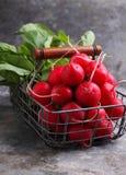 Manojo de un rábano rojo del jardín con las hojas verdes Imagenes de archivo