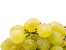 Manojo de uva verde Imagenes de archivo