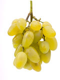 Manojo de uva verde Fotos de archivo libres de regalías
