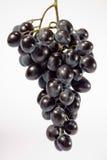 Manojo de uvas Fotografía de archivo