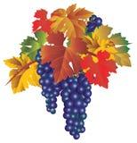 Manojo de uvas