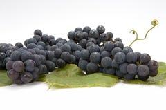 Manojo de uvas Fotografía de archivo libre de regalías