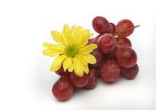 Manojo de uvas con una flor amarilla Imagen de archivo libre de regalías