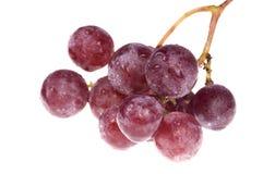 Manojo de uvas deliciosas, mojadas aisladas en blanco Imagen de archivo libre de regalías