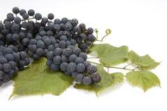 Manojo de uvas en las hojas Imagen de archivo libre de regalías