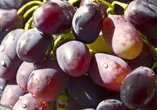 Manojo de uvas maduro en un primer transparente del cuenco Foto de archivo libre de regalías