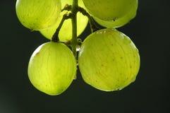 Manojo de uvas verdes fotos de archivo libres de regalías