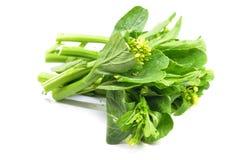 Manojo de verdura choy floral del verde de la suma fotografía de archivo