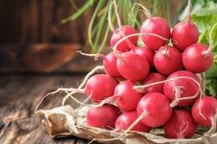 Manojo de verduras jovenes frescas del rábano imagen de archivo libre de regalías