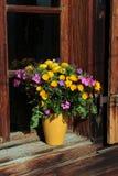 Manojo de wildflowers alpinos Fotos de archivo libres de regalías