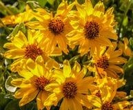 Manojo de wildflowers amarillos de Rubecka Foto de archivo