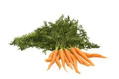 Manojo de zanahoria fresca aislado Imágenes de archivo libres de regalías