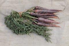 Manojo de zanahoria púrpura Imágenes de archivo libres de regalías