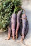 Manojo de zanahoria púrpura Fotografía de archivo libre de regalías