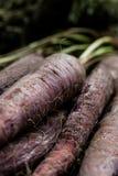 Manojo de zanahoria púrpura Imagenes de archivo