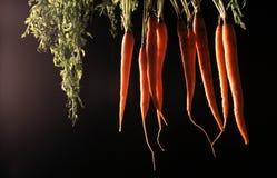 Manojo de zanahorias Imagen de archivo libre de regalías