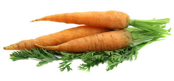 Manojo de zanahorias Imagen de archivo
