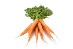 Manojo de zanahorias aisladas Imagen de archivo libre de regalías