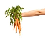 Manojo de zanahorias con las hojas en un fondo blanco Foto de archivo libre de regalías