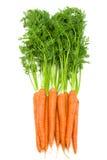 Manojo de zanahorias crudas frescas con los tops verdes aislados Fotografía de archivo libre de regalías