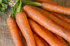 Manojo de zanahorias recientemente escogidas del jardín Imágenes de archivo libres de regalías
