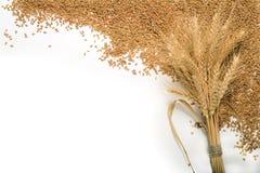Manojo del bastidor del trigo y de los granos Fotografía de archivo libre de regalías