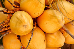 Manojo del coco Foto de archivo