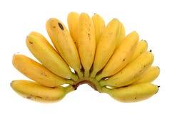 Manojo del plátano del bebé imagen de archivo libre de regalías