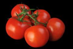 Manojo del tomate Imagen de archivo libre de regalías