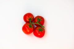 Manojo del tomate Imagen de archivo