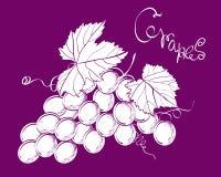 Manojo del vector de uvas Foto de archivo libre de regalías