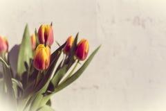 Manojo del vintage de tulipanes en el fondo blanco Imagenes de archivo