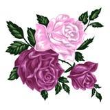Manojo dibujado mano aislado de rosas rosadas stock de ilustración