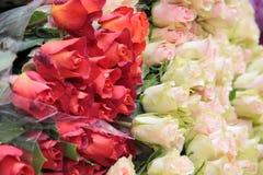 Manojo grande de rosas blancas y rojas Foto de archivo libre de regalías