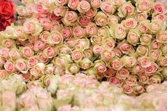 Manojo grande de rosas rosas claras del corte Imagen de archivo libre de regalías
