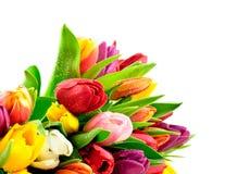 Manojo mezclado Waterdrops del arco iris de los tulipanes mojado Imagenes de archivo