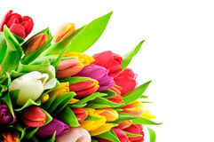 Manojo mezclado Waterdrops del arco iris de los tulipanes mojado Imágenes de archivo libres de regalías